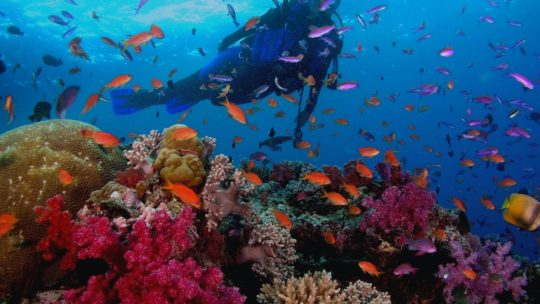 PADI Dive Master Course in Hurghada