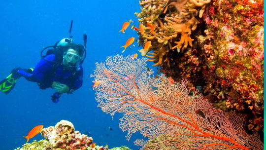 PADI Open Water Course in Hurghada