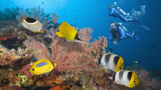 PADI Recue Diver Course & Emergency First Response (EFR)