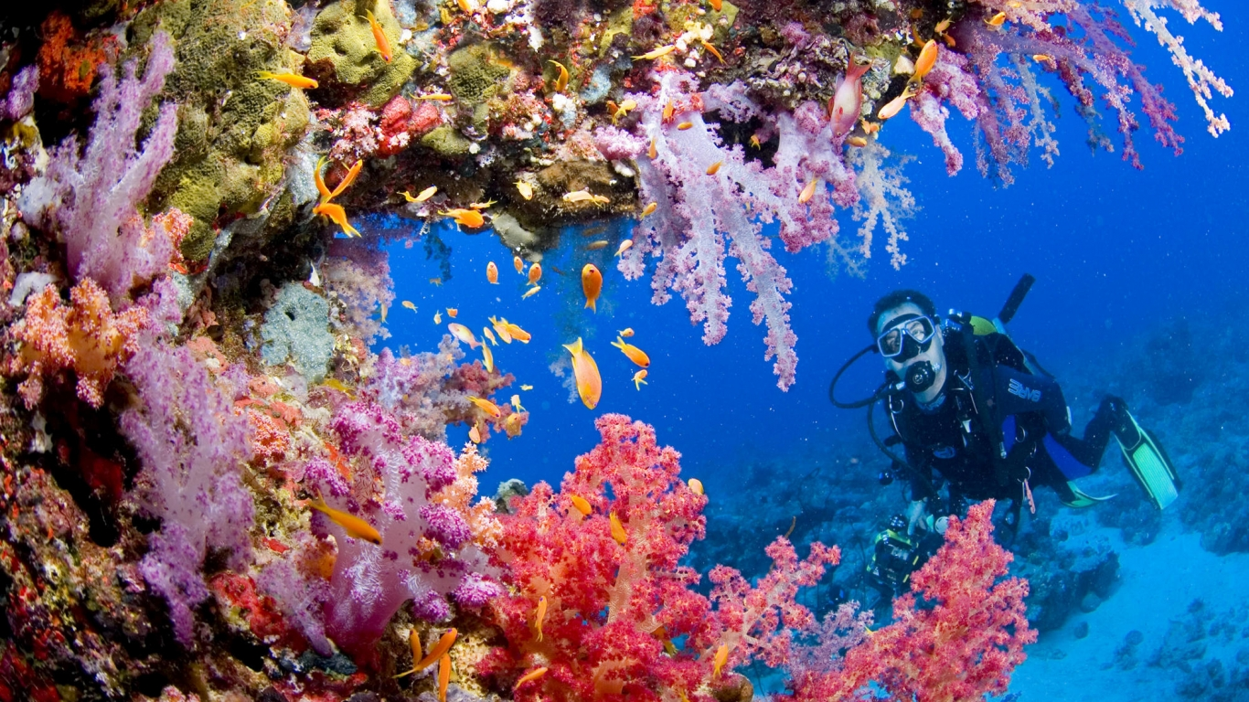PADI Speciality Courses in Hurghada