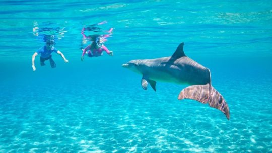 Swim with Dolphins in Hurghada