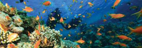 Diving holidays in Hurghada
