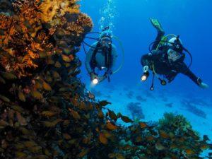diving in Hurghada - PADI Courses in Hurghada