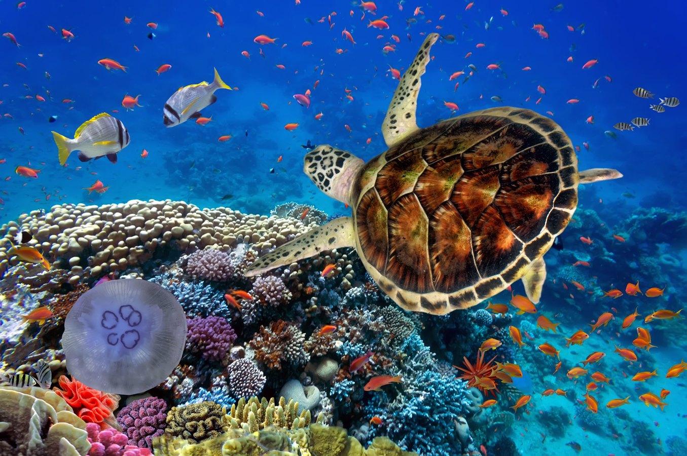 Marsa Alam diving trip