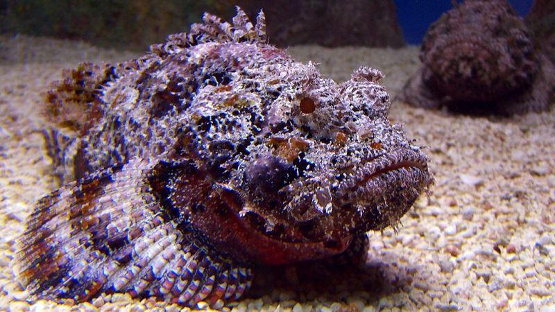 The Stone Fish